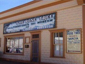 Rose Tree Museum1